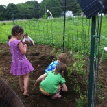 planting cherry tomatoes