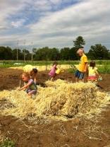 mulching the corn